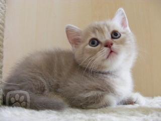 Obrázek kočky